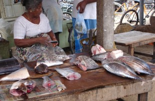 MARKET STALL IN NEGOMBO copy